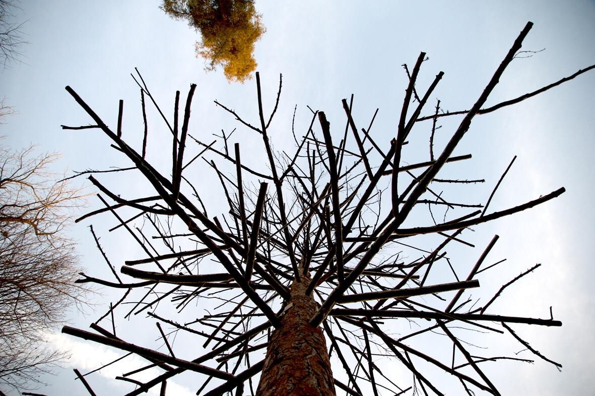Cosa fare in veneto magazine Padova news veneti eventi a Padova donne veneto orto botanico di Padova installazione de Lucchi albero degli alberi